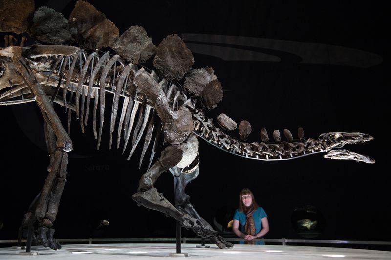 https: img.okezone.com content 2020 08 27 16 2268387 ilmuwan-ini-temukan-tulang-dinosaurus-saat-berlari-di-tepi-pantai-u38xdQmZx8.jpg